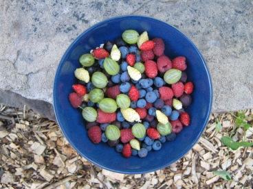 berries 5