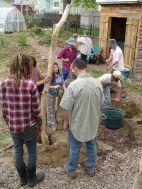 putting up kiwi trellis