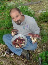 stropharia mushrooms