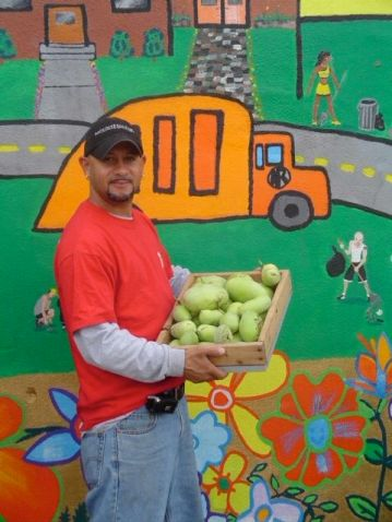 William Aponte of Nuestras Raices with pawpaws