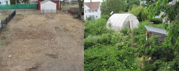 before after backyard
