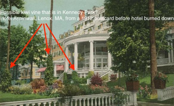 hotel_aspinwall_lenoxma_kiwi