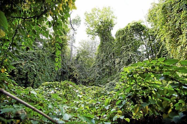 kennedy park hardy kiwi.jpg