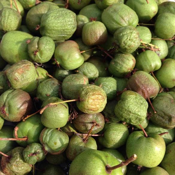 kiwifruittaste